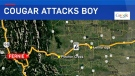 A cougar attacked a young boy in the lower Morrissey Creek area near Fernie on Sunday, August 12, 2018 (GoogleMaps)