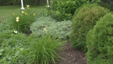 Perennials and shrubs