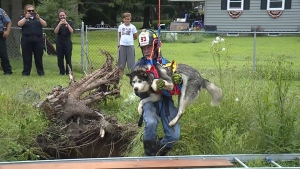 Dog rescued from sinkhole in Pennsylvania