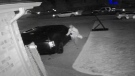 LaSalle police are looking for a suspect after several vehicle and garage break-ins. (Courtesy LaSalle police)