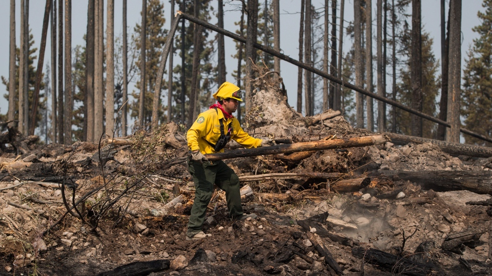 Firefighter Christian Garcia, of Mexico, moves a burnt tree to get at hotspots in an area burned by the Shovel Lake wildfire near Endako, B.C., on Thursday, August 16, 2018. THE CANADIAN PRESS/Darryl Dyck