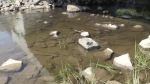 Low water conditions in Sudbury