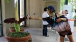 A visitor takes a picture of the so-called corpse flower, known for the rotten stench it releases when it blooms, at the Huntington Library Friday, Aug. 17, 2018, in San Marino, Calif. (AP Photo/Ariel Tu)