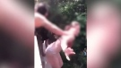 A screengrab from a viral video that shows a woman being pushed off a Washington bridge is seen. (Twitter/@ABC)