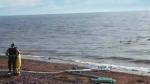 'Underwater heatwave' threatens marine life