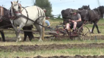 cookstown plow match plowing
