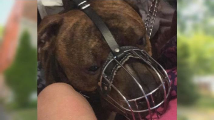 Two children were injured in separate incidents involving this dog in Montreal North on Sun., Aug. 19, 2018.