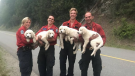 Firefighters in British Columbia came across five lost puppies while heading home for the day. (B.C. Wildfire Service/Facebook)