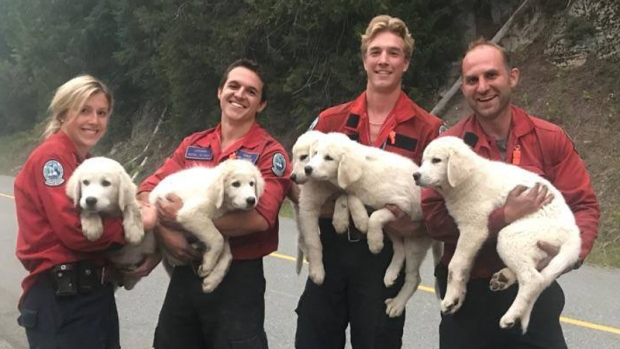 A photo from the BC Wildfire Service shows firefighters holding up five puppies they found on the side of the road.