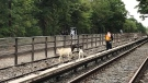 Two goats were found roaming along the subway tracks in New York City on Aug. 20. (NYCT Subway / Twitter)