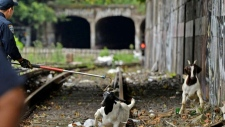 Goats rescued from NYC subway tracks