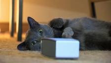 Cat Calm Radio - music for cats