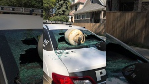A propane tank smashes a window of a peace officer's vehicle in this undated police handout photo. (THE CANADIAN PRESS/HO, Winnipeg Police Service)