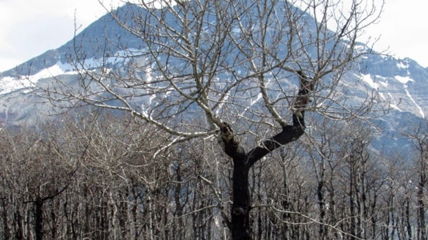 Parks Canada rescinds evacuation alert