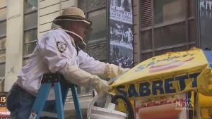 CTV Montreal: A bee-sy hot dog cart