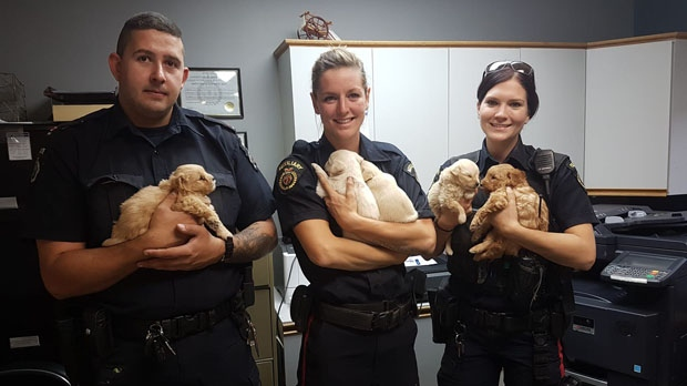 Officers and puppies