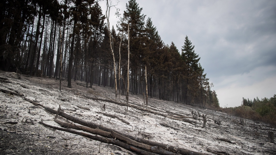 An area burned by the Shovel Lake wildfire is seen near Fort Fraser, B.C., on Thursday, August 23, 2018. THE CANADIAN PRESS/Darryl Dyck
