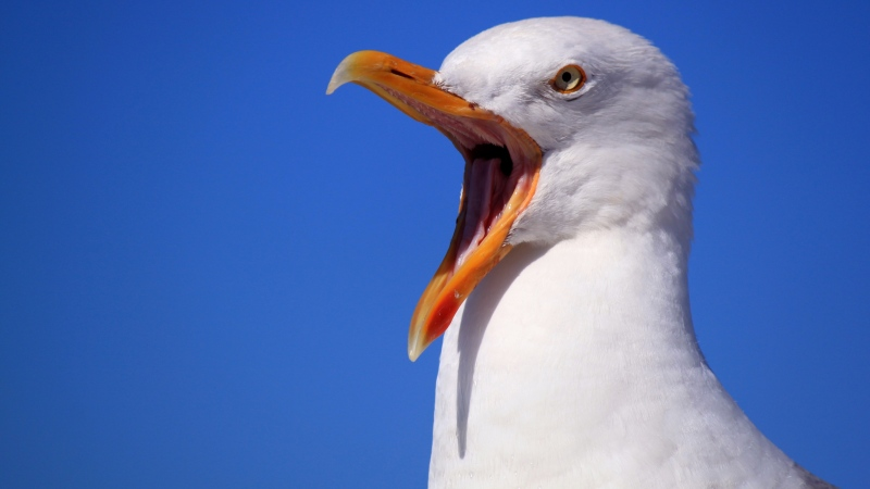 A seagull is shown in this file photo. (Pixabay)