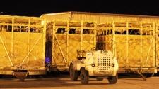 horses crates 2