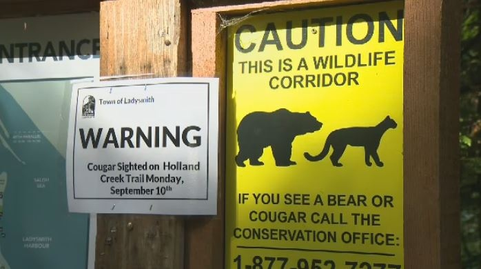 Signs have been placed on Holland Creek trail after a man had a run-in with a cougar Monday, Sept. 10, 2018. (CTV Vancouver Island)