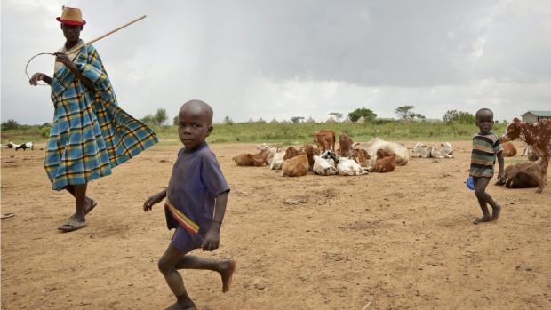 Minding cattle in Karamojong, Uganda