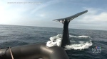 Whale tail collides with tour boat off N.S. coast