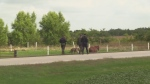 OPP search for a man with the canine unit