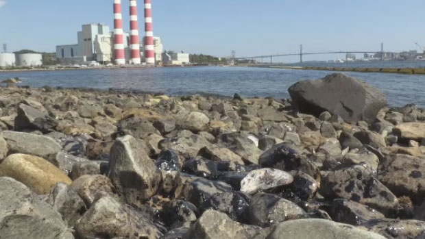 The World Clean Up Day litter pick up of Halifax Harbour is revealing some of the worst finds in more than two decades.
