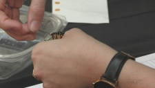 Monarch butterflies tagged before migration