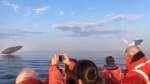 A video of three humpback whales surging out of the water one after the other off Nova Scotia has captured the attention of people around the world. (Edmond Giroux via Storyful/YouTube)