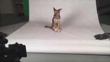 Introducing Abby, CTV's newest commercial star