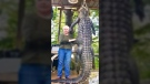 Texas grandma takes down huge gator