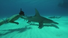 Movie explores cause of shark extinction