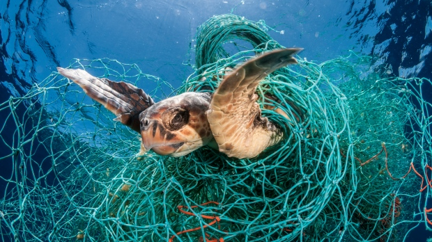 A Loggerhead turtle seen trapped in an abandoned drifting net in the Mediterranean sea in February 2018. (Jordi Chias / naturepl.com)