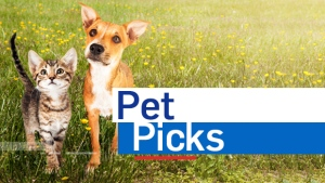 Pet Picks
