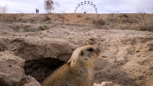 A gopher sits at its burrow in a park at the Russian leased Baikonur cosmodrome, Kazakhstan, Monday, April 17, 2017. (AP Photo/Dmitri Lovetsky)