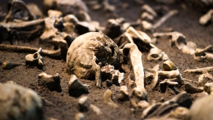 The Sept. 20, 2018 photo shows human skulls and bones of the battle of Tollensetal about 1250 BC. displayed at an archeological exhibition at the Martin-Gropius-Bau museum in Berlin. (AP Photo/Markus Schreiber)
