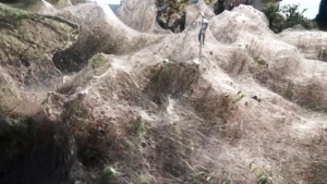 In this frame grab taken from video on Sept. 18, 2018, a view of spider webs over bushes, in Aitoliko, Greece.  (Giannis Giannakopoulos via AP)