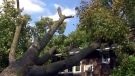 A tree that has fallen onto a home in Toronto is seen after high winds rolled through the area on Friday afternoon.