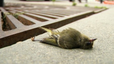 Protecting feathered friends in bird strike season