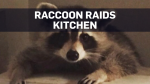Caught on cam: Woman pleads with raccoon to leave