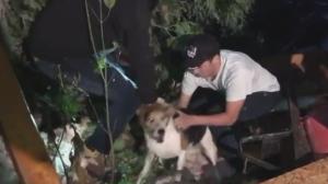 People pull a dog to safety after a tornado struck Ottawa. (Matt Day/Twitter)