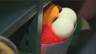 The googly eyes of an Elmo doll peek out from the bag where it's been sorted and tagged, waiting to be reclaimed at the STM's loat and found depot at Berri-UQAM metro. (CTV Montreal)