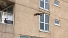 A raccoon falls off a building in New Jersey. (Micah Rea / YouTube)