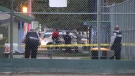 RCMP investigate a stabbing incident at Unwin Park in Surrey on Saturday (Shane MacKichan)