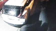 Black bear attacks Coquitlam man in his garage