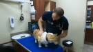 CTV National News: Warning on pets and pot