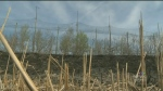 CN  helping cover brush fire costs