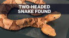 two head snake