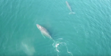 Marko Jurj was treated to a unique view of a pair of whales playing just under the ocean's surface. (YouTube/MarkoJ)